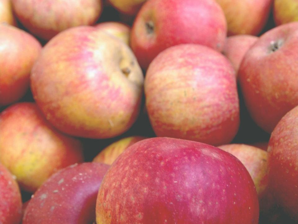 integratori colesterolo mela annurca